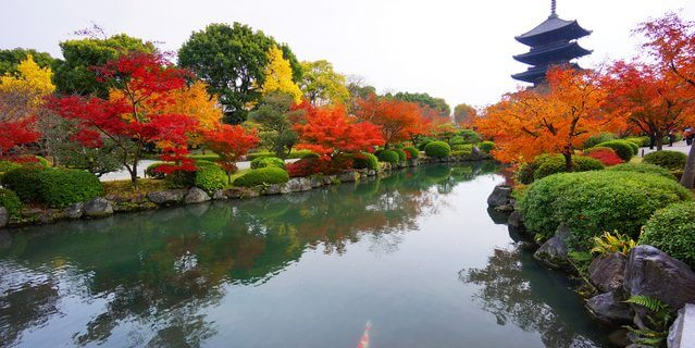 京都・東寺の紅葉
